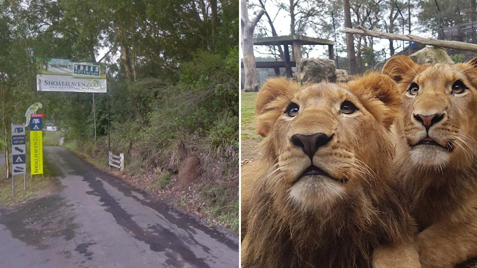 Pictured left is the entrance to Shoalhaven Zoo. Right is two of the zoo's lions. Source: Google Maps and Instagram