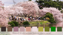 <p>Ah, blossom trees! A real sight to behold, Shinjuku Gyoen turns a breathtaking pastel pink each spring, drawing in a crowd of steady visitors. One of Tokyo's largest and most popular parks, it's certainly one to add to your must-visit list. </p>