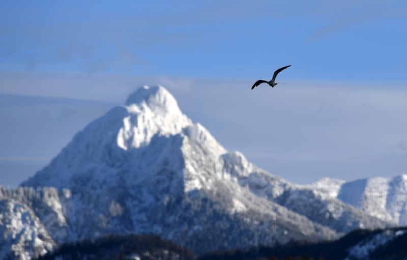 FILE PHOTO: A bird flies through the sky in front of a snow-covered mountain