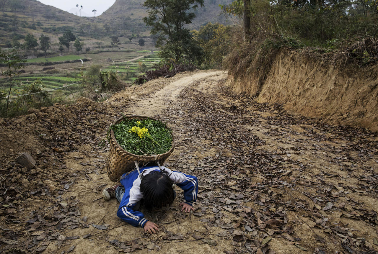 <p>Luo Hongni, 11, collapses from the weight as she carries flowers while doing chores in the fields on Dec. 18, 2016 in Anshun, China. (Photo: Kevin Frayer/Getty Images) </p>