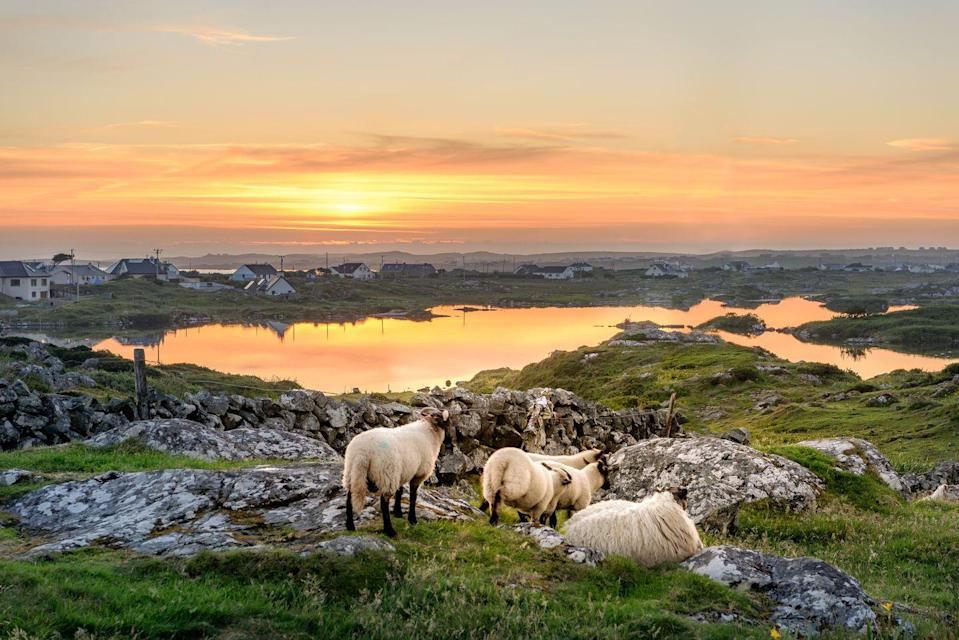 "<p>Get crafty on the Emerald Isle with Good Housekeeping next year, when we take readers on a <a href=""https://www.goodhousekeepingholidays.com/tours/ireland-knitting"" rel=""nofollow noopener"" target=""_blank"" data-ylk=""slk:knitting break"" class=""link rapid-noclick-resp"">knitting break</a> to charming Galway. </p><p>Staying in four-star luxury on Ireland's west coast, you'll take part in fun workshops with French knitwear designer and instructor Julie Dubreux, as well as spending a full day on the island of Inis Oírr to meet the locals and learn how distinctive Aran sweaters are made. </p><p>This is a great way to meet like-minded readers and relax and restore in a peaceful setting.</p><p><strong>When?</strong> April 2022</p><p><strong>Duration: </strong>Six days</p><p><strong>Price:</strong> From £1,675 per person</p><p><a class=""link rapid-noclick-resp"" href=""https://www.goodhousekeepingholidays.com/tours/ireland-knitting"" rel=""nofollow noopener"" target=""_blank"" data-ylk=""slk:FIND OUT MORE"">FIND OUT MORE</a></p>"