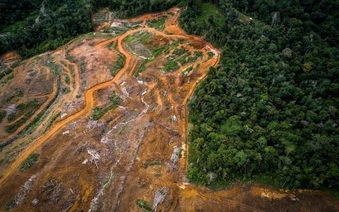 A newly discovered species of orangutan is among several animals under threat from a $1.6-billion-dollar hydroelectric dam project in Indonesia, conservationists have warned.