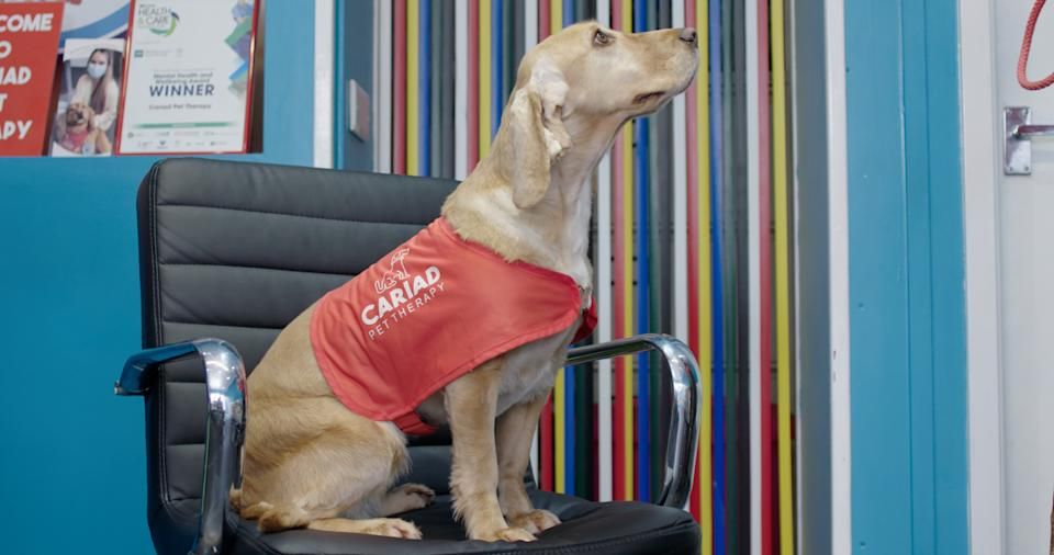 South Wales charity Cariad Pet Therapy are one of almost 200 animal-related projects across the UK who benefit from National Lottery Funding