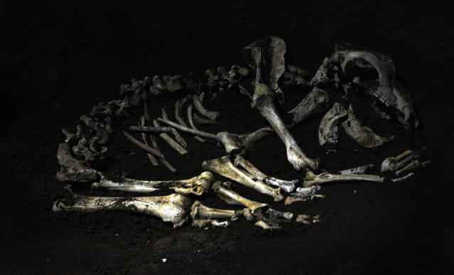 Bones of bears have been discovered in caves across Europe (Picture: REUTERS/Vincent West (SPAIN))