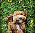 """<p>• """"Crazy dog lady.""""</p><p>• """"Dogs are the universe's way of apologizing for your relatives.""""</p><p>• """"Dog hair is my go-to accessory.""""</p><p>• """"The more men I meet, the more I love my dog.""""</p><p>• """"Not all dogs are good boys. Some are good girls!""""</p><p>• """"First he stole my heart, then he stole my bed.""""</p><p>• """"What kind of dog doesn't bark? A hush puppy!""""</p><p>__________________________________________________________</p><p><em><a href=""""https://subscribe.hearstmags.com/subscribe/womansday/253396?source=wdy_edit_article"""" rel=""""nofollow noopener"""" target=""""_blank"""" data-ylk=""""slk:Subscribe to Woman's Day"""" class=""""link rapid-noclick-resp"""">Subscribe to Woman's Day</a> today and get <strong>73% off your first 12 issues</strong>. And while you're at it, <a href=""""https://subscribe.hearstmags.com/circulation/shared/email/newsletters/signup/wdy-su01.html"""" rel=""""nofollow noopener"""" target=""""_blank"""" data-ylk=""""slk:sign up for our FREE newsletter"""" class=""""link rapid-noclick-resp"""">sign up for our FREE newsletter</a> for even more of the Woman's Day content you want.</em></p>"""