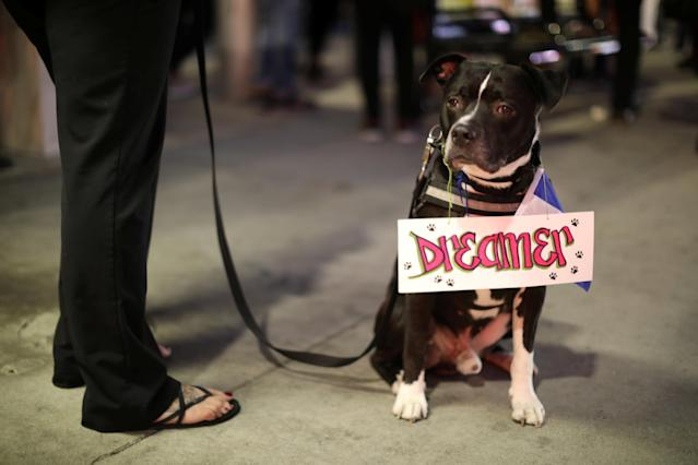 <p>A woman with a dog protests to call for a new DREAM Act to replace DACA in Los Angeles, Calif., Jan. 17, 2018. (Photo: Lucy Nicholson/Reuters) </p>