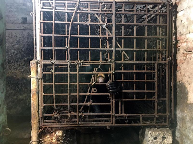 Farmed bears in China and Vietnam are kept for their whole lives in cages: Animals Asia/Flickr