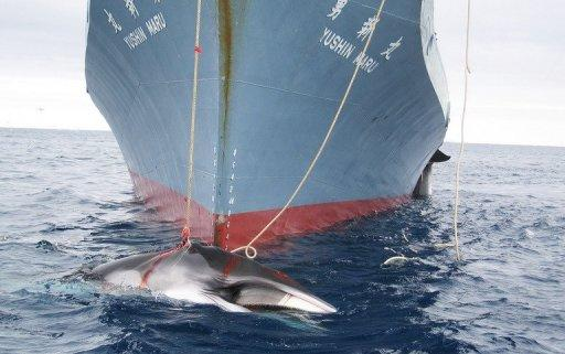 Australia and New Zealand argue Japan's whaling is needless and has no scientific merit