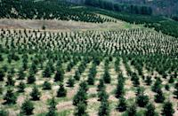 """<p><strong>Angie, Louisiana</strong> (Starting November 28)</p><p>There are more than 1,000 trees available at <a href=""""http://www.steeleschristmastreefarm.com/2012_Season.html"""" rel=""""nofollow noopener"""" target=""""_blank"""" data-ylk=""""slk:Steele's Christmas Tree Farm"""" class=""""link rapid-noclick-resp""""><strong>Steele's Christmas Tree Farm</strong></a>, and you can hop aboard for a hayride during the weekends. After shopping, you can keep the holiday spirit alive with some retail therapy at the gift shop.<br></p>"""