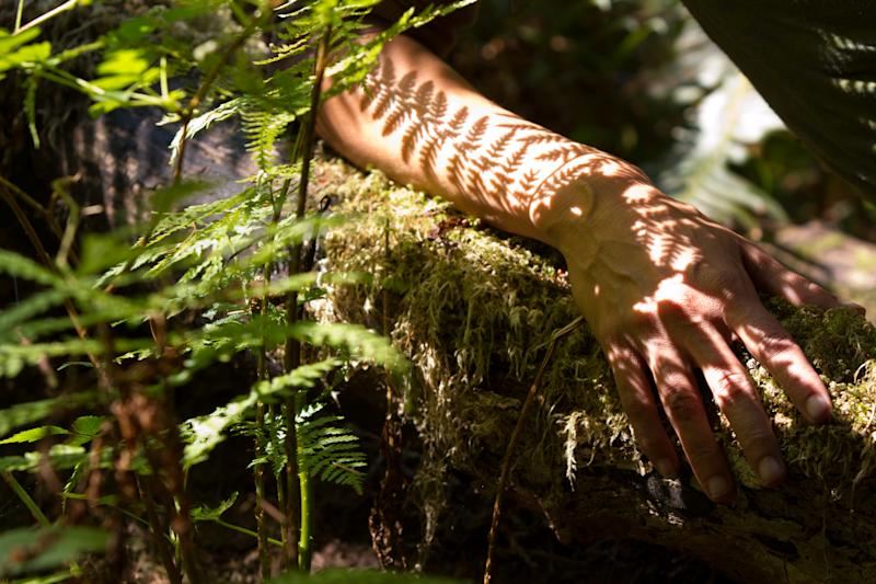 Can Spending Time In Nature Improve >> Spending Time With Trees Really Will Improve Your Health