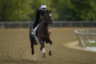 Preakness entrant Crowded Trade works out during a training session ahead of the Preakness Stakes horse race at Pimlico Race Course, Wednesday, May 12, 2021, in Baltimore. (AP Photo/Julio Cortez)