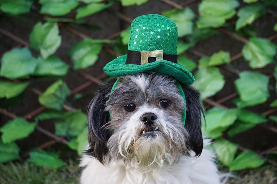 "<p>Whether you can't wait to get decked out in green or you aren't a huge fan of the March 17 festivities, <a href=""https://www.womansday.com/life/entertainment/g392/10-movie-picks-for-st-paddys-day-104588/"" rel=""nofollow noopener"" target=""_blank"" data-ylk=""slk:St. Patrick's Day"" class=""link rapid-noclick-resp"">St. Patrick's Day</a> is an opportunity for everyone to <a href=""https://www.womansday.com/life/a4698/unique-ways-to-celebrate-st-patricks-day-104555/"" rel=""nofollow noopener"" target=""_blank"" data-ylk=""slk:celebrate Irish culture"" class=""link rapid-noclick-resp"">celebrate Irish culture</a>. And while the day is certainly about a whole lot more than eating boatloads of corned beef and cabbage, wearing an obnoxious amount of green, and enjoying a pint (or several) of Guinness, it's also the perfect excuse to share one (or all!) of these hilarious <a href=""https://www.womansday.com/life/g30581310/st-patricks-day-quotes/"" rel=""nofollow noopener"" target=""_blank"" data-ylk=""slk:St. Patrick's Day memes"" class=""link rapid-noclick-resp"">St. Patrick's Day memes</a>.</p><p>Believe it or not, <a href=""https://www.history.com/topics/st-patricks-day/history-of-st-patricks-day"" rel=""nofollow noopener"" target=""_blank"" data-ylk=""slk:St. Patrick's Day began as a religious holiday"" class=""link rapid-noclick-resp"">St. Patrick's Day began as a religious holiday</a>. In Ireland, March 17 (which falls during the Christian season of Lent) was a day to purposefully recognize the death of St. Patrick, a fifth-century patron saint who is credited with bringing the Christian religion to Ireland. Today, people of all backgrounds and cultures commemorate St. Patrick's Day, and you'll even find elaborate St. Paddy's Day celebrations in places like Japan, Singapore, and Russia. Of course, no one goes all out on March 17 quite like Americans, whose annual traditions include dyeing the Chicago River green, throwing parades, and — for many people — imbibing at various local pubs and bars. </p><p>Whether you're a loud-and-proud Irish American who loves St. Paddy's Day with reckless abandon, or you're someone who would rather stay home and watch a <a href=""https://www.womansday.com/life/entertainment/g392/10-movie-picks-for-st-paddys-day-104588/"" rel=""nofollow noopener"" target=""_blank"" data-ylk=""slk:St. Patrick's Day movie"" class=""link rapid-noclick-resp"">St. Patrick's Day movie</a>, there's no denying that these St. Patrick's Day jokes on Instagram are as funny as they accurate. </p>"