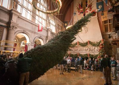 It takes nearly 30 employees to lift and secure the towering Banquet Hall Christmas Tree inside Biltmore House. Staff uses 500 lights, 500 ornaments, and 500 wrapped gifts to decorate the 34-foot-tall tree. The tree comes from a Christmas tree farm in Newland, N.C.