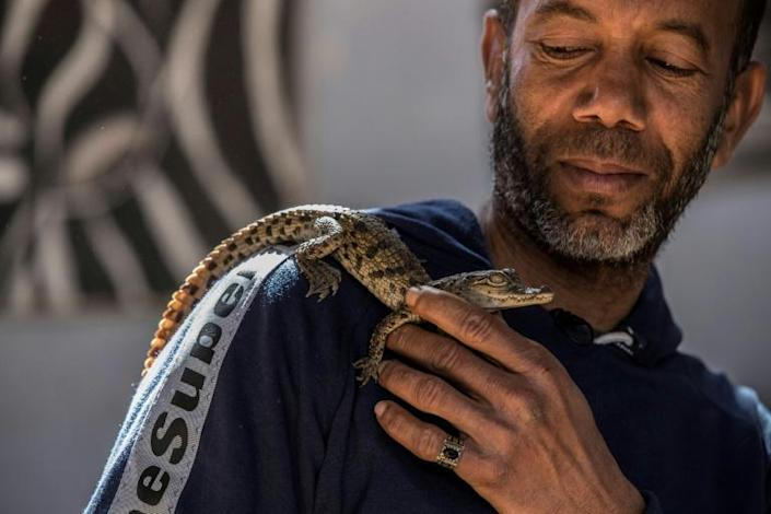 Mamdouh Hassan's father taught him how to raise and tame baby crocodiles (AFP Photo/Khaled DESOUKI)