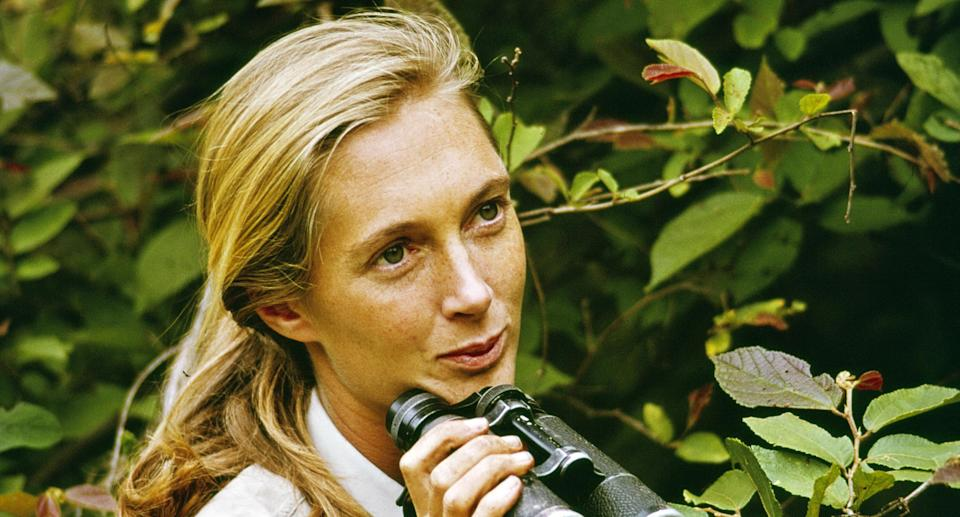 Jane Goodall in Gombe Stream National Park, Tanzania, in 1965. (Photo: CBS via Getty Images)