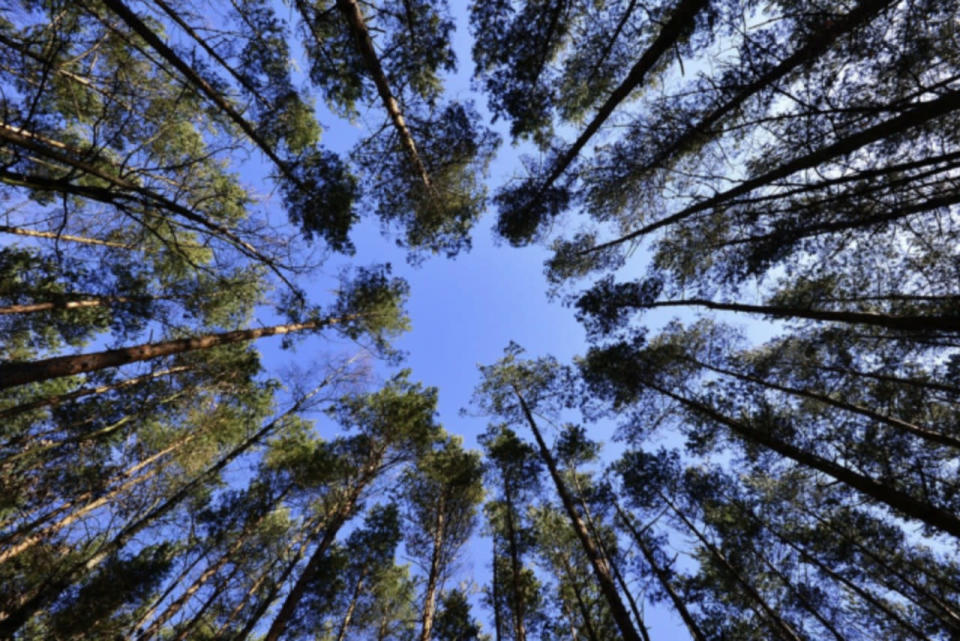 Tree canopies and urban forests are more important now than ever