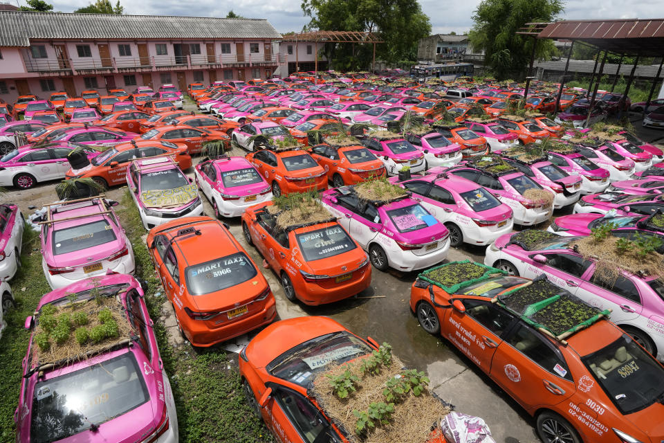 """Miniature gardens sit on the rooftops of unused taxis parked in Bangkok, Thailand, Thursday, Sept. 16, 2021. Taxi fleets in Thailand are giving new meaning to the term """"rooftop garden,"""" as they utilize the roofs of cabs idled by the coronavirus crisis to serve as small vegetable plots and raise awareness about the plight of out of work drivers. (AP Photo/Sakchai Lalit)"""