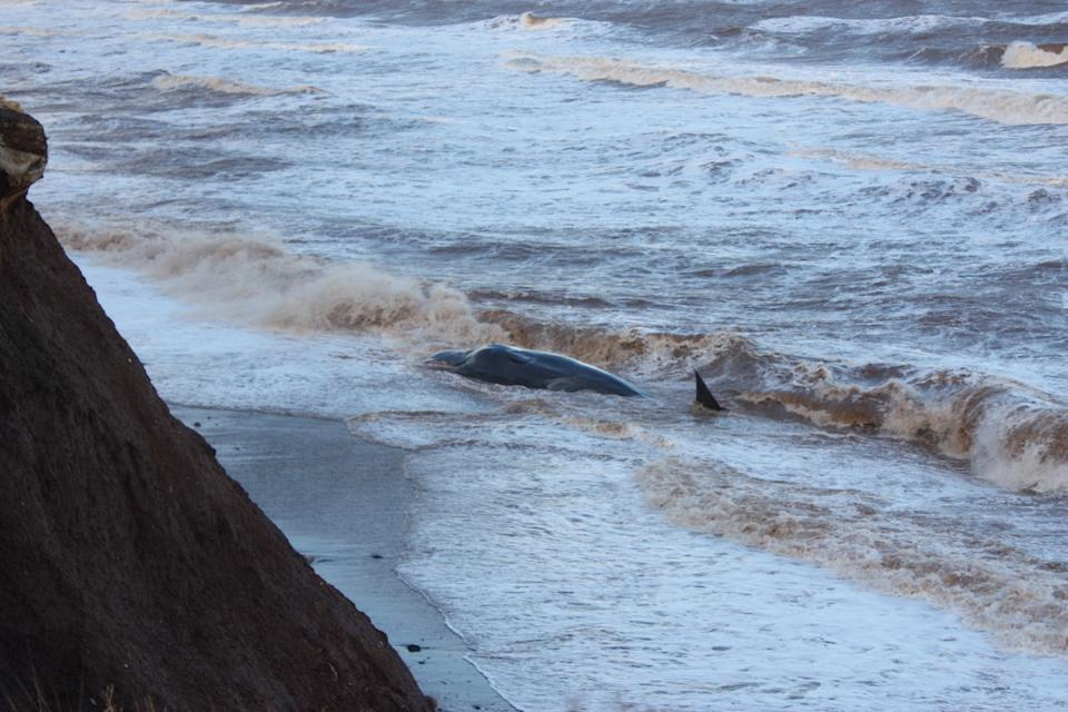 Sperm whales have been stranded off the East Yorkshire coast. (PA)