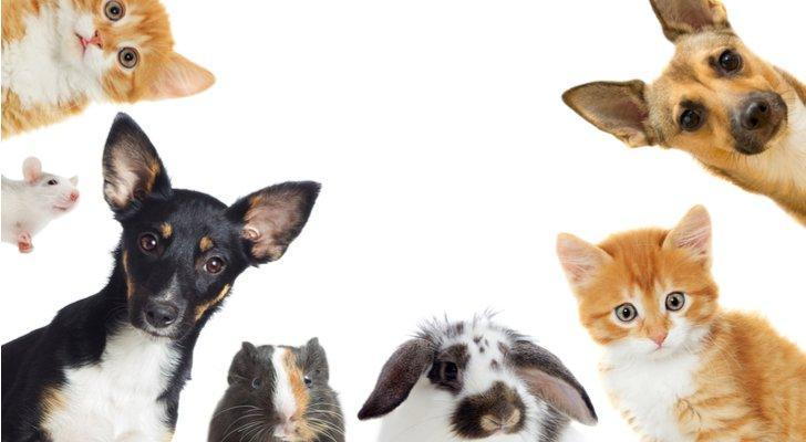 PetMed Express Earnings: PETS Stock Plunges on Q4 Miss