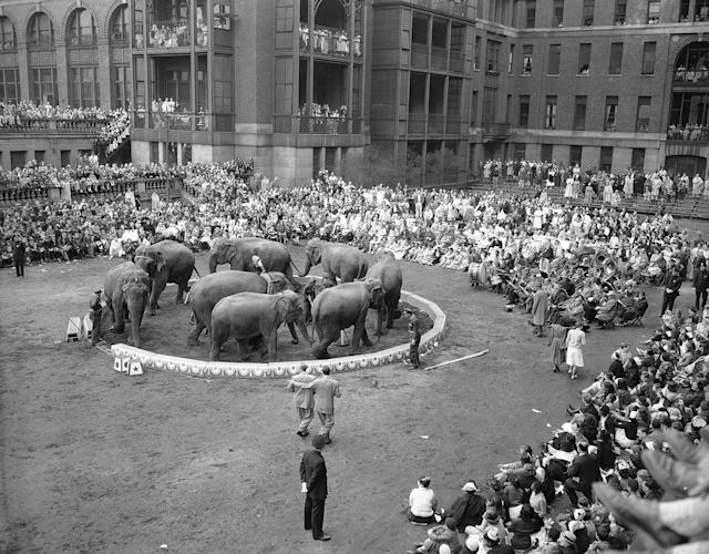 <p>Men, women and children at Bellevue Hospital watch the elephants during the 48th annual performance of the Ringling Brothers Barnum and Bailey Circus on the hospital parade grounds in New York on April 21, 1950. Thirteen acts were presented during the one-hour show. (AP Photo/Tom Fitzsimmons) </p>