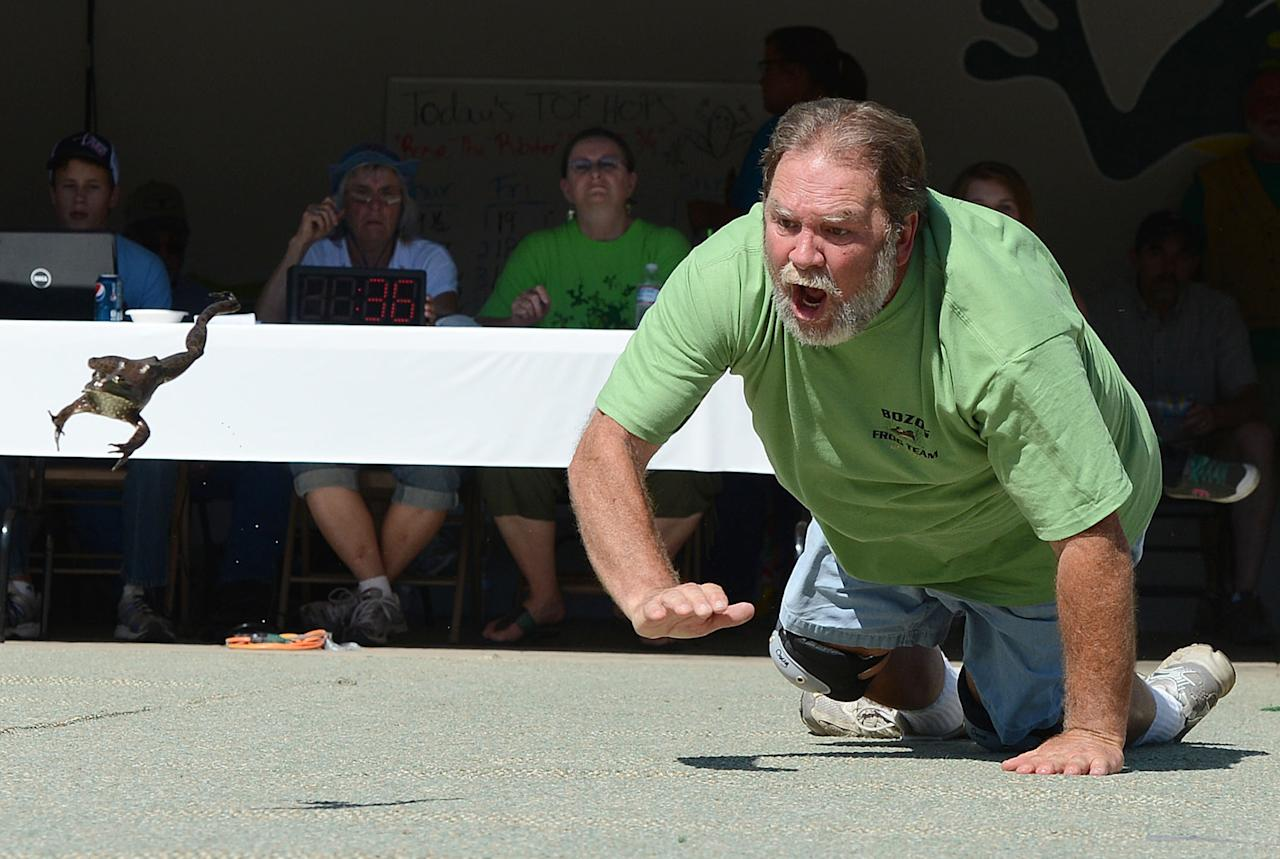 """Doug Yorke and his frog """"Mr. Bill"""" compete at the Jumping Frog Jubilee Sunday, May 20, 2012 in Calaveras County, Calif. (AP Photo/Chris Weeks)"""