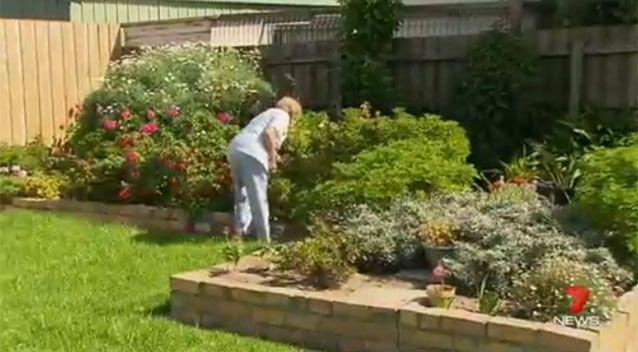 Redbacks are often found in Melbourne's leafy suburbs. Photo: 7 News