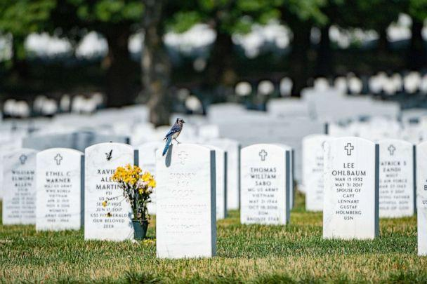 PHOTO: A bluejay sits on a headstone in Section 60 of Arlington National Cemetery, Arlington, Virginia, June 24, 2019. (Elizabeth Fraser/U.S. Army)