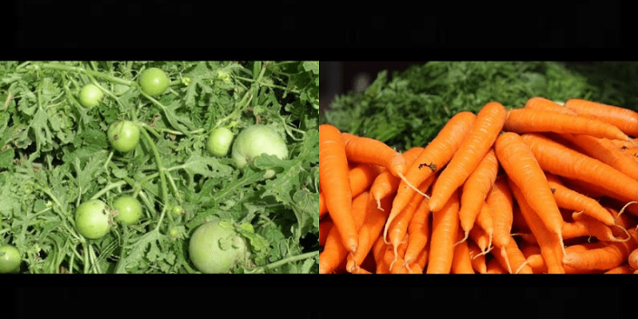 Save Well Being's organic vegetables
