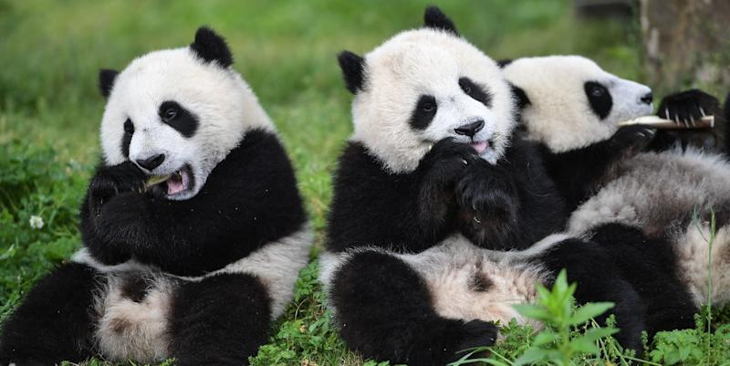 Photo credit: Xinhua News Agency - Getty Images