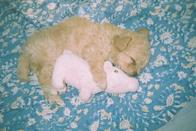 """<p>The Riverdale actor got her maltipoo rescue pup Truffle - who she calls her 'quarantine buddy' at the end of last year, but urged fans to consider fostering from a shelter while self-isolating.</p><p><a href=""""https://www.instagram.com/p/B92Ny1CBmZ9/"""" rel=""""nofollow noopener"""" target=""""_blank"""" data-ylk=""""slk:See the original post on Instagram"""" class=""""link rapid-noclick-resp"""">See the original post on Instagram</a></p>"""