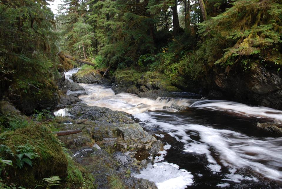 Fall at Log Jam Creek on Prince of Wales Island, Alaska, within Tongass National Forest