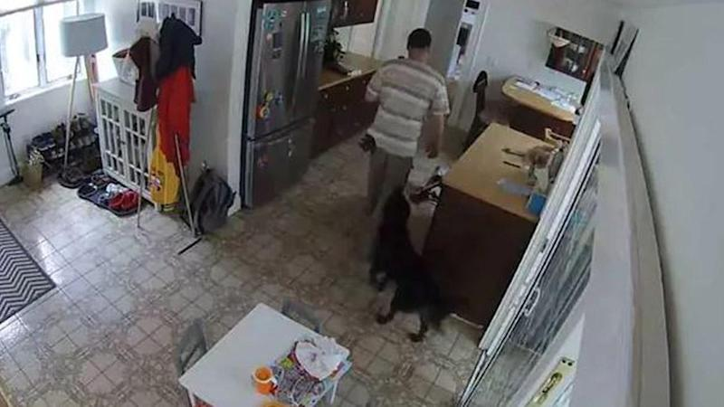 Burglar Breaks Into Massachusetts Home Only to Be Followed Around by Family Dog