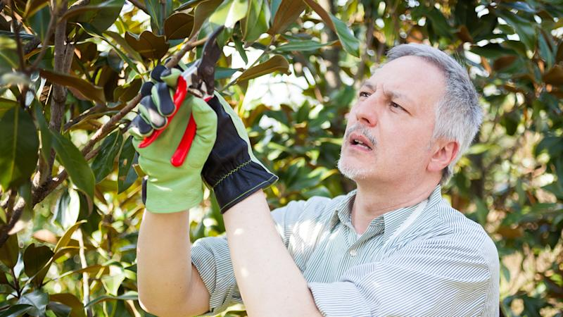 Prune Your Trees and Shrubs