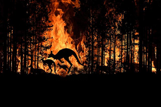 Bush fire In Australia Forest Many Kangaroos And Other Animals Running Escaping To Save Their Lives, Evacuation destroyed silhouette.
