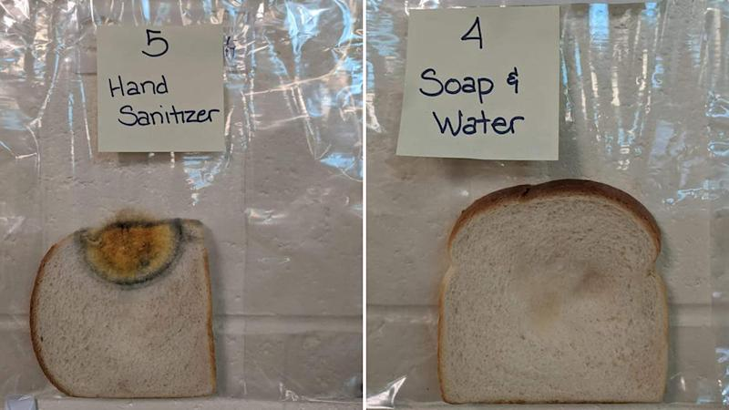 A slice of bread touched by a hand washed with sanitiser displaying a rainbow portion, and a fairly clean bread slice that was touched by hand washed with soap and water.