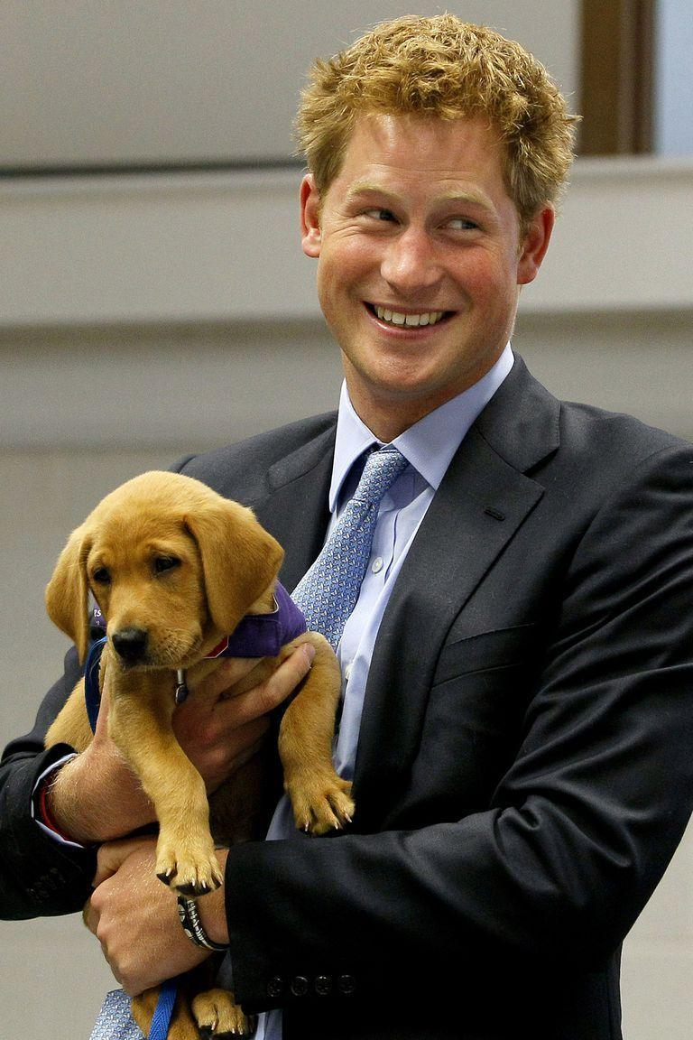 <p>The prince holds a puppy at the Canine Partners Training Centre—making hearts melt everywhere. </p>
