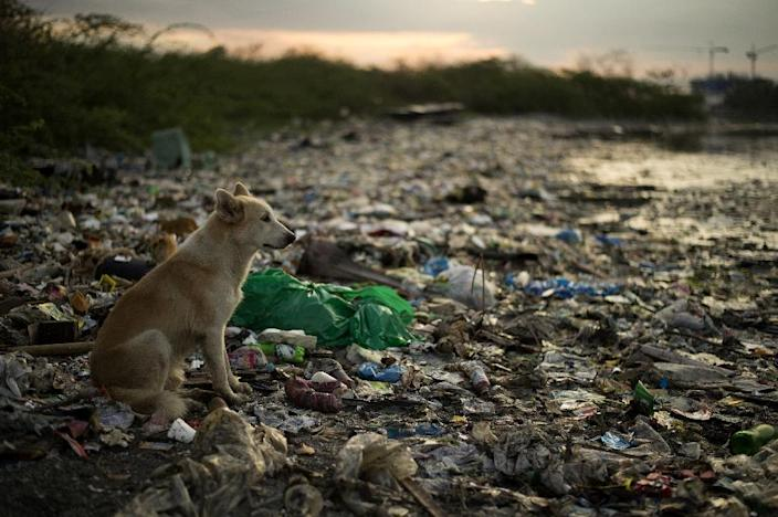 Low rates of rubbish collection in many parts of Asia is one of the main reasons why so much plastic waste ends up in the sea (AFP Photo/Noel CELIS)