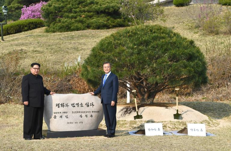 The tree planted by the leaders of the two Koreas was germinated in 1953, the year Korean War hostilities ceased