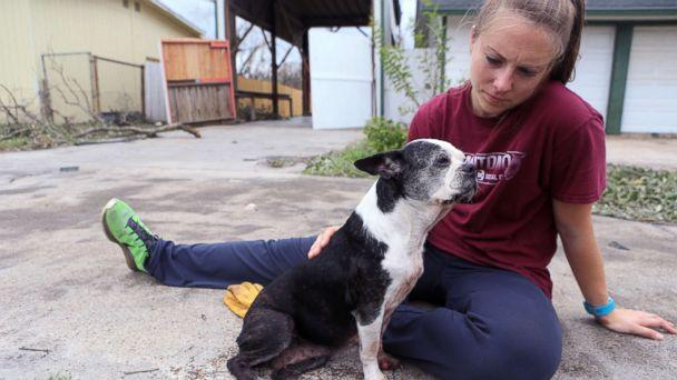 PHOTO: Jessica Dziuk found this dog in a neighborhood near Highway 35 and Market Street in Rockport two days after Hurricane Harvey devastated the Coastal city, Aug. 27, 2017, in Rockport, Tx.  (Rachel Denny Clow/Caller-Times via USA Today)