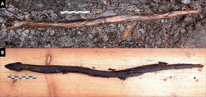 This 4000-year-old wooden carving of a snake was likely used as a staff by a Neolithic Shaman. (Satu Koivisto)