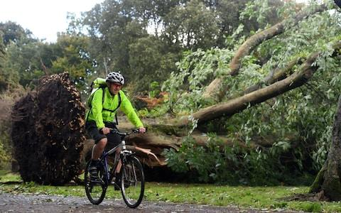 A cyclist passes a tree that has fallen in Bute Park, Cardiff - Credit: Wales News Service