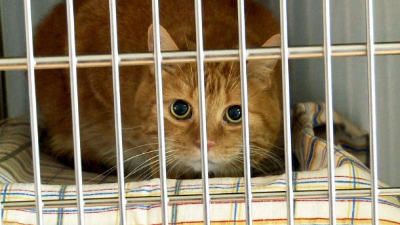 Few pets available for adoption at P.E.I. Humane Society