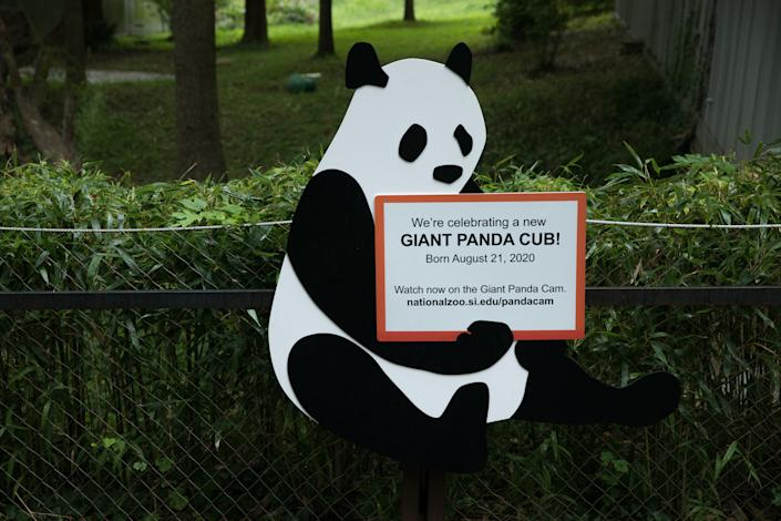 An announcement is seen at Smithsonian's National Zoo following the birth of the zoo's first giant panda cub in five years, Aug. 22, 2020. (Photo by Evelyn Hockstein/Washington Post via Getty Images)