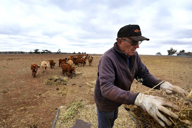 Crop and livestock farmer Wayne Dunford hand feeds his cattle with bales of hay transported from Victoria at Lynton Station west of Parkes.