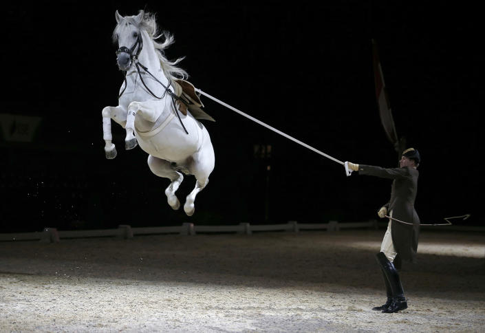 <p>Riders and their horses of the Spanish Riding School of Vienna perform a dress rehearsal for the media at the SSE Arena in London, Britain November 10, 2016. (REUTERS/Peter Nicholls) </p>