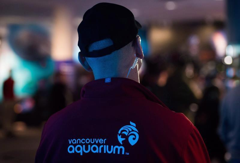 Vancouver Aquarium closes programming amid 'financially challenging' time