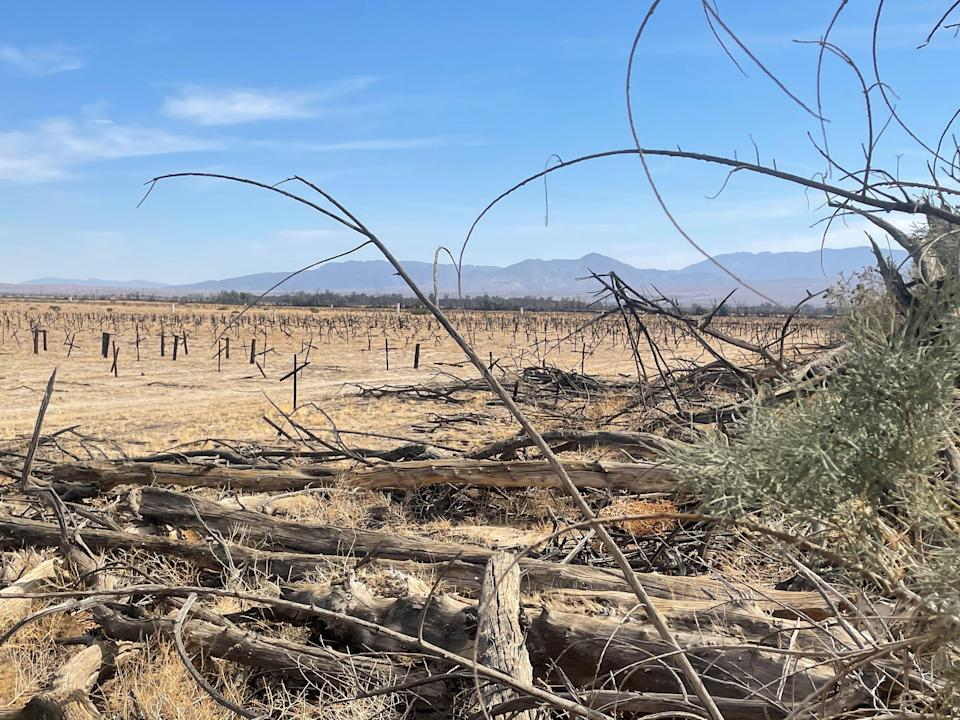 As Borrego Springs' aquifer dwindles, some grape fields have been fallowed and once lush wind-rows are now bleached and dying. March 23, 2021