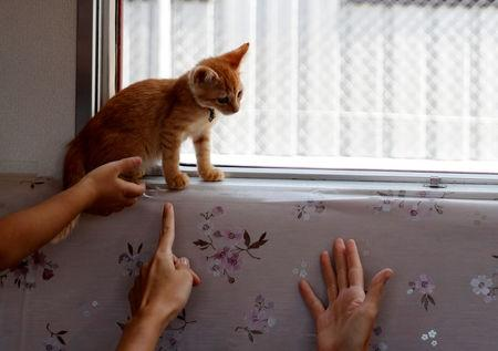 Cat sits near a window in a train cat cafe that brings awareness to stray cat culling in Ogaki
