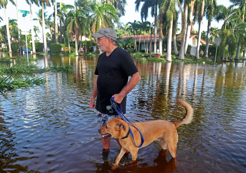 Andrew Perini walks his neighbour's dog, Arnie, the day after Hurricane Irma came through South Florida (Picture: Rex)