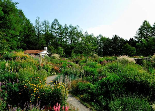 A colorful garden utilizing the natural scenery